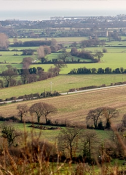 environnement campagne millet
