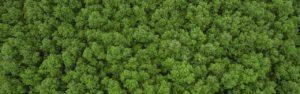 photo aerienne foret eco responsable Millet
